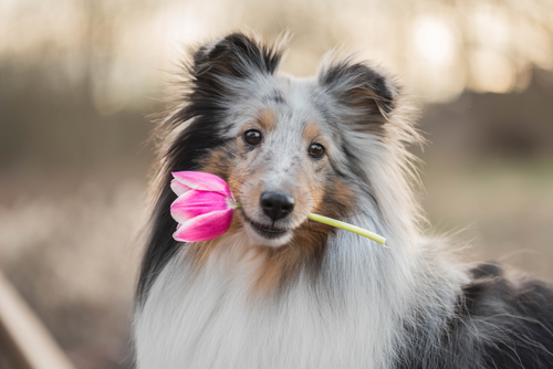 Dog Training Group Class Schedule for March 2019 | Leader of